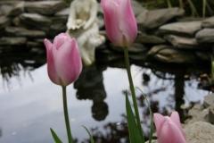 32-pond-flowers