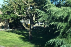 30-front-yard