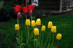 31-flowers