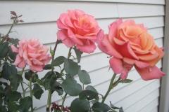 33-flowers