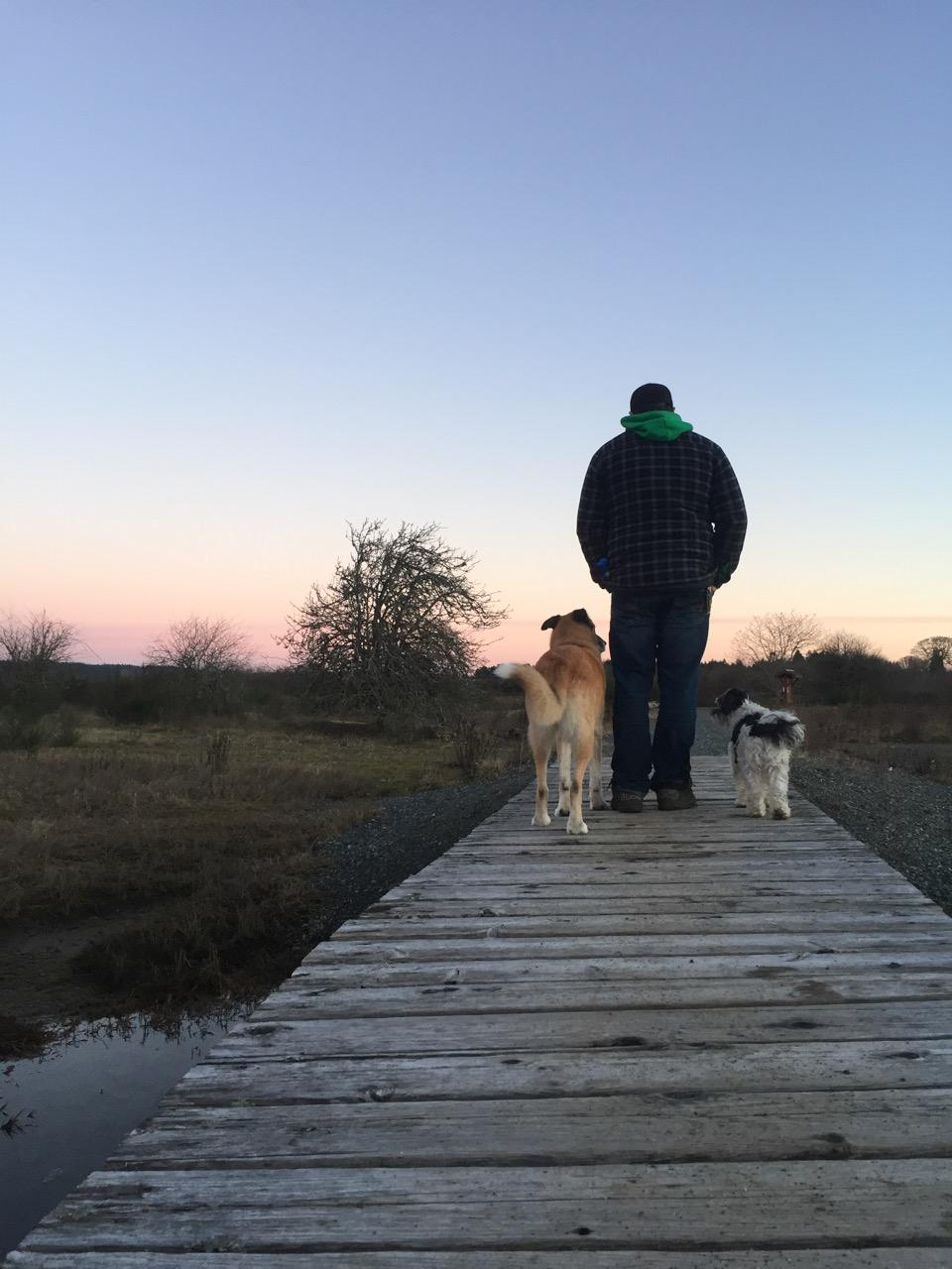 2 dogs sunset
