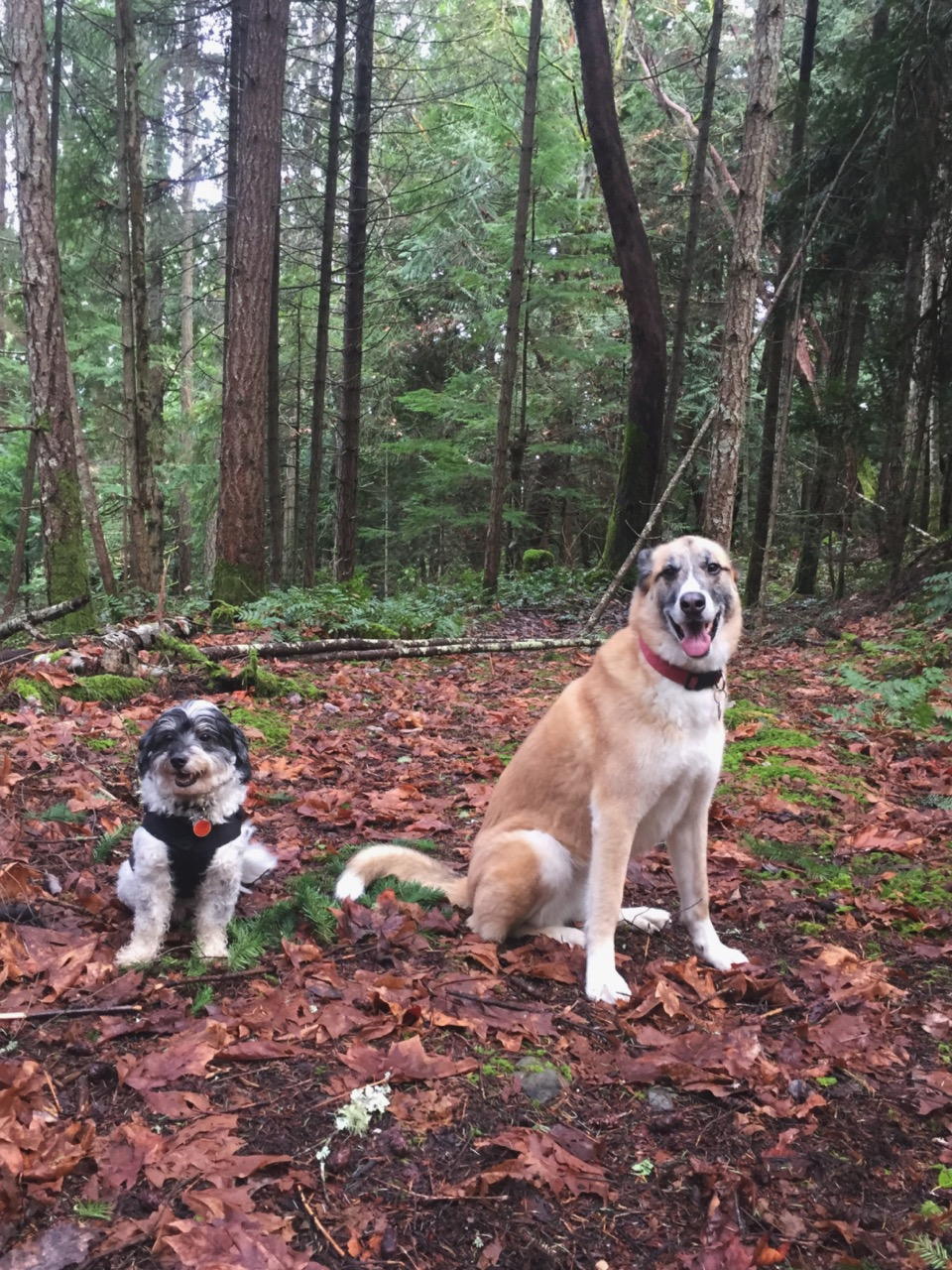 two dogs off leash on hike