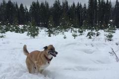 1 dog snow