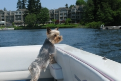 dog looking out boat