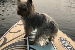 paddleboard dog