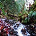 lush rainforest with creek running through British Columbia Canada