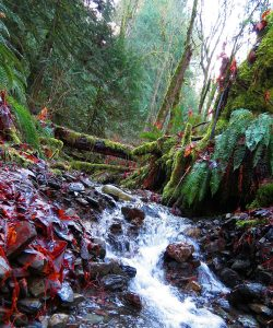 Waterfall creek running through Nanaimo rainforest