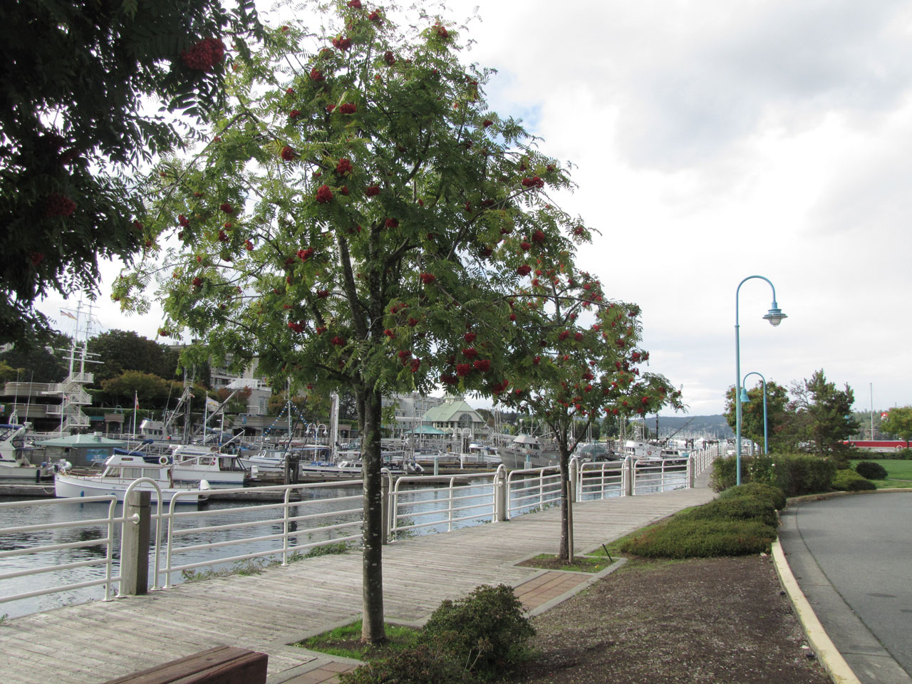Parks of Nanaimo beside ocean with walkway and marina and tree lined street