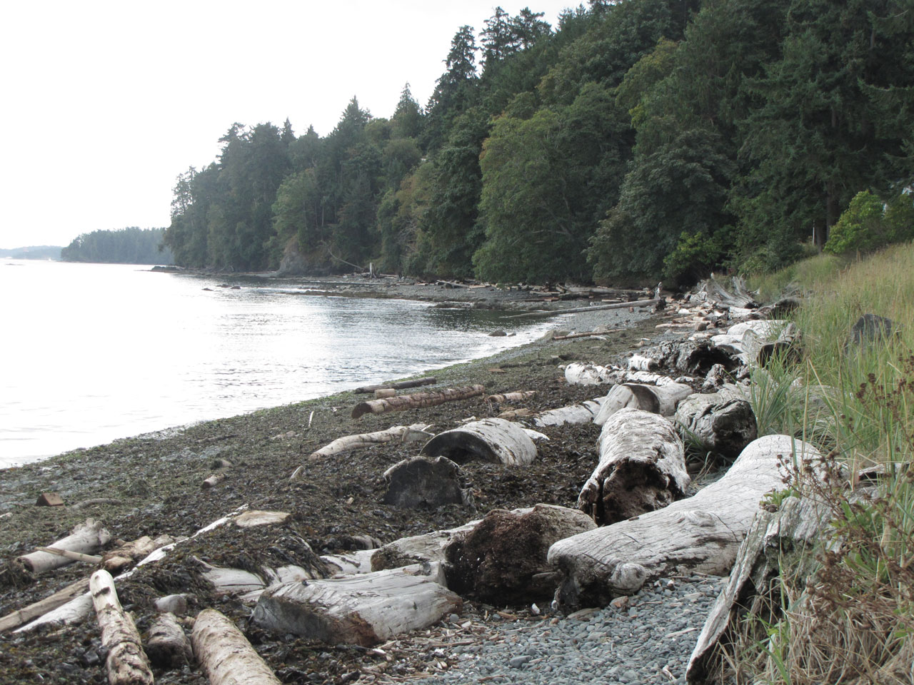 Rocky beach and washed up wood on West Coast beach Canada