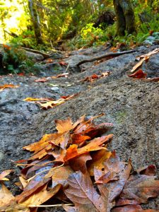 Exploreing the local parks during the fall in Nanaimo